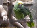Vogelpark Biebesheim