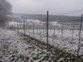 verschneiter Weinberg zu Ostern